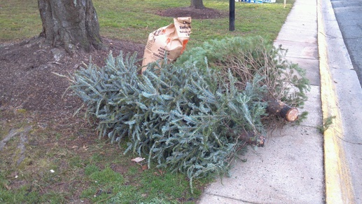 christas tree recycling